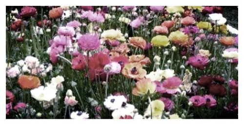 A grainy picture of flowers